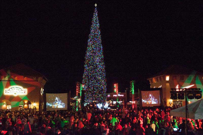 America's Tallest Fresh-Cut Christmas Tree At Outlets At
