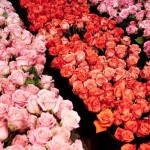 Thirty Thousand FTD Fresh Flowers at kate spade new york Spring 2016
